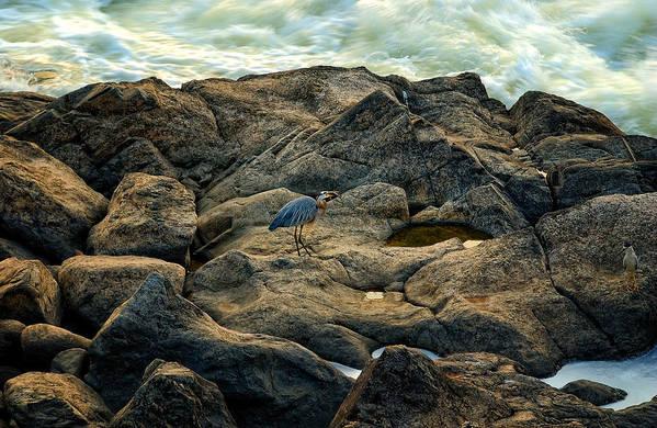 Bird Art Print featuring the photograph 3 by Greg Ferrell