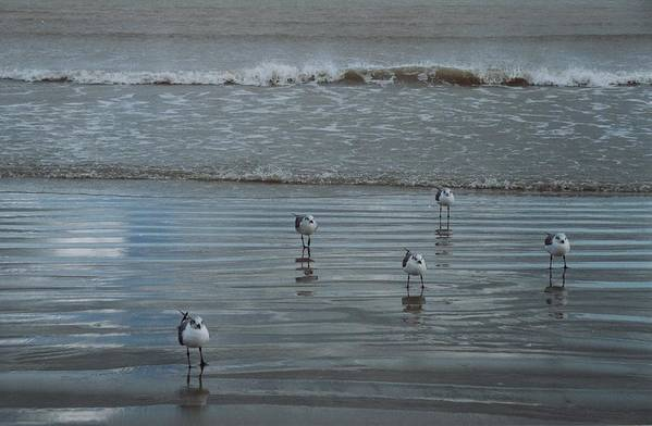 Birds Art Print featuring the photograph Padre Island Shore Birds by Wendell Baggett