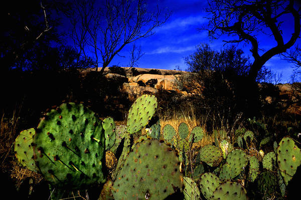 Landscapes Art Print featuring the photograph Prickly Pears Enchanted Rock Texas by Tom Fant