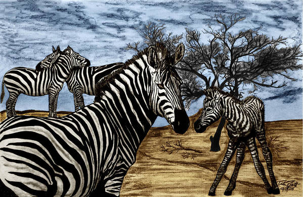 Zebra Outback Art Print featuring the drawing Zebra Outback by Peter Piatt