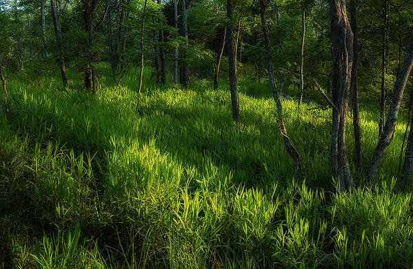 Forest Art Print featuring the photograph 10 by Greg Ferrell