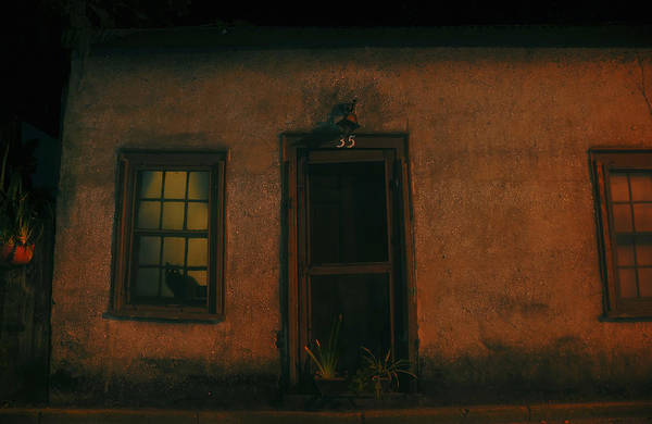 Black Cat Art Print featuring the photograph A Black Cat's Night by David Lee Thompson