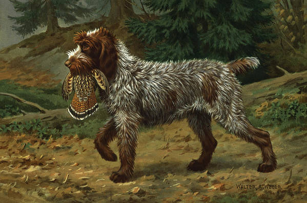 Illustration Art Print featuring the photograph A Wire-haired Pointing Griffon Holds by Walter A. Weber