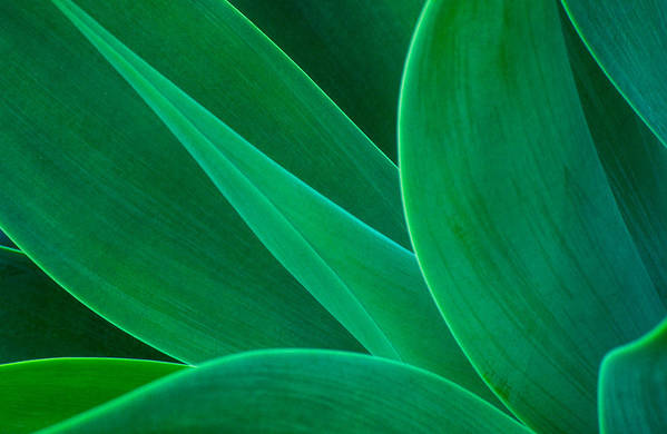 African Art Print featuring the photograph Abstract Agave Plant by Colin Radford