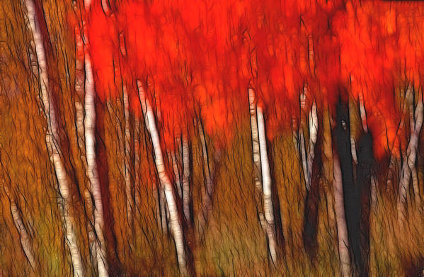 Trees Art Print featuring the photograph Autumn Fire by Bill Morgenstern