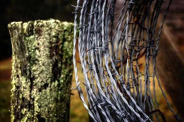 Barbed Wire Art Print featuring the photograph Barbed Wire by Greg Mimbs