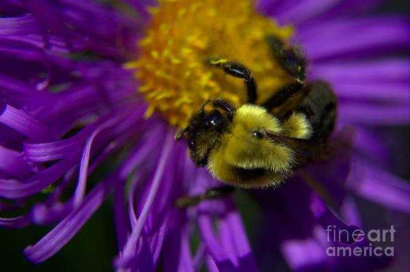Bee Art Print featuring the photograph Beez Kneez by The Stone Age