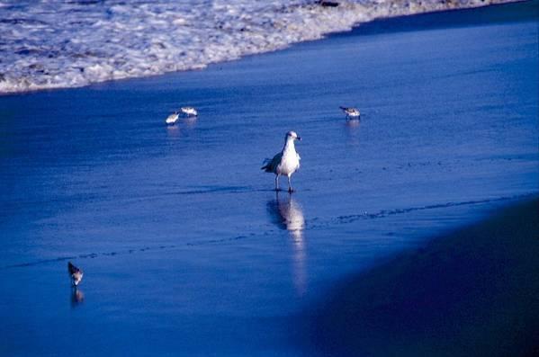 Ocean Art Print featuring the photograph Bird At Ocean's Tide by George Ferrell