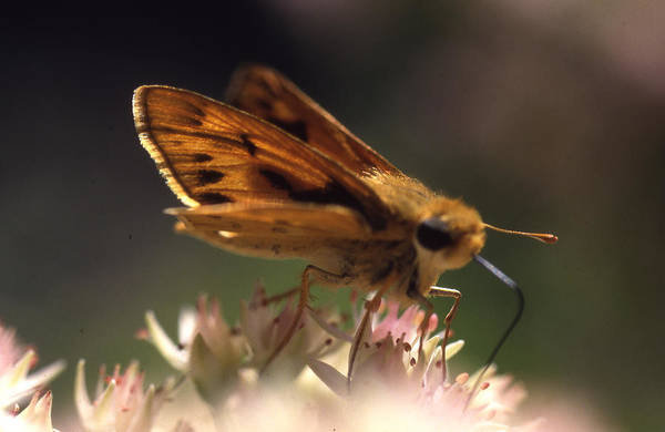 Art Print featuring the photograph Butterfly-lick by Curtis J Neeley Jr