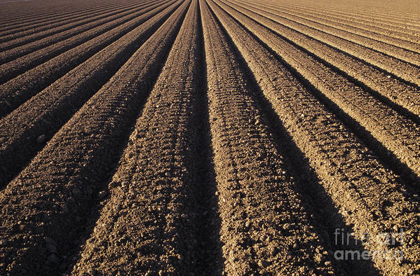 Agriculture Art Print featuring the photograph Califronia, View by Larry Dale Gordon - Printscapes