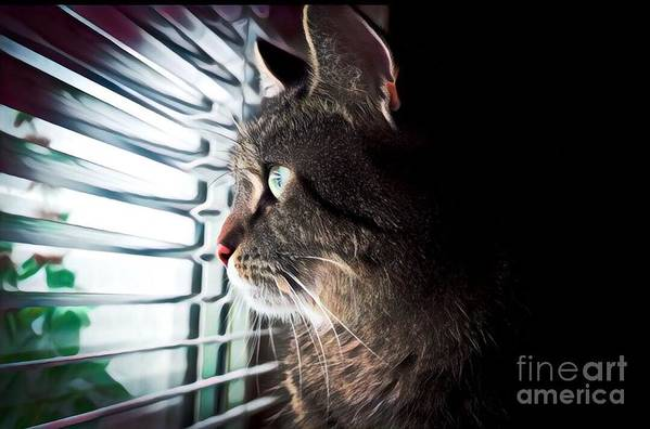 Animal Art Print featuring the painting Cat Looking Out Window by Tarisa Smith