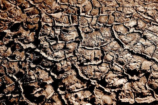 Landscape Art Print featuring the photograph Cracked Earth by Caroline Clark