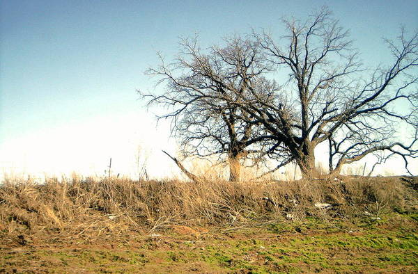 Art Print featuring the photograph Dead Tree by Chad Taber