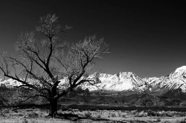Black Adn White Art Print featuring the photograph Desolation by Jessica Roth