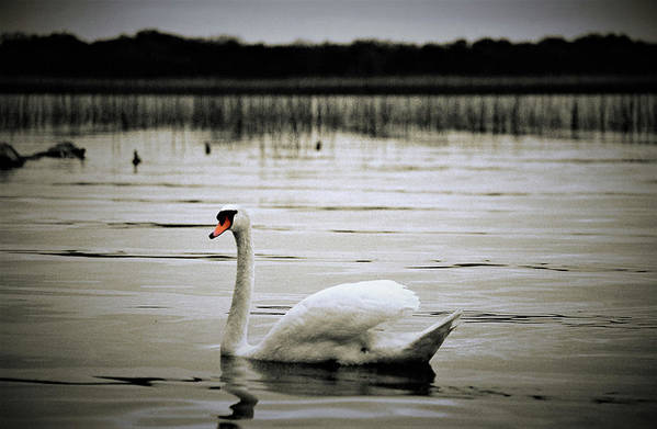 Lake Art Print featuring the photograph Elegance In Motion by MichealAnthony