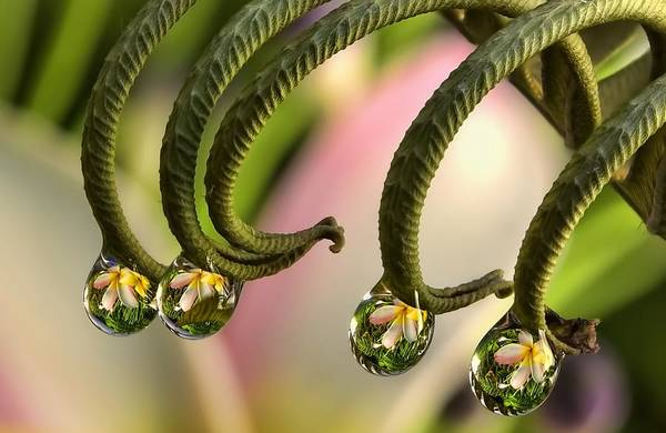 Art Print featuring the photograph Fern And Plumeria by Maui Up Close