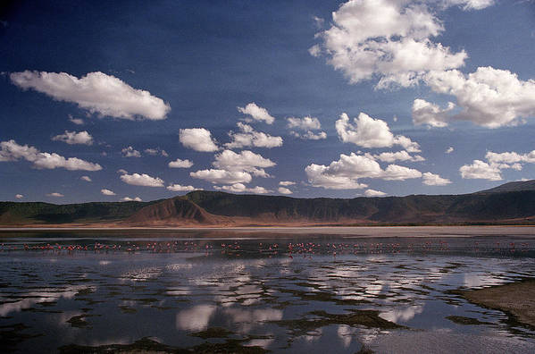 Ngorongoro Crater Art Print featuring the photograph Flamingos by Marcus Best