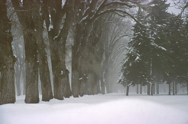 Trees Art Print featuring the photograph Foggy Morning Landscape 6 by Steve Ohlsen