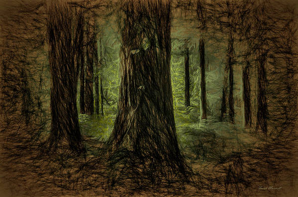 Nature Art Print featuring the photograph Forest Fantasy by Frank Maxwell
