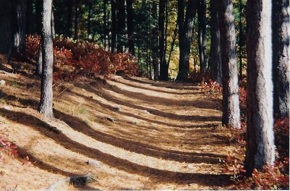 Fall Art Print featuring the photograph Forest Path by Ellen Leigh