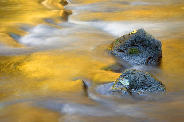 Leaves Art Print featuring the photograph Golden Refuge by Mike Dawson