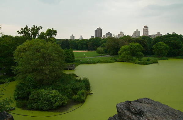 Art Print featuring the photograph Green And Gray In Central Park by Kareem Farooq