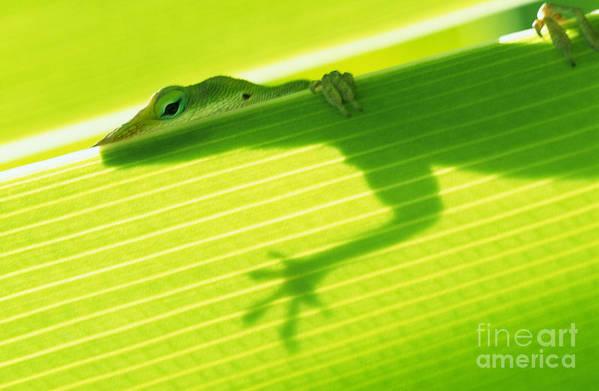 76-csw0115 Art Print featuring the photograph Green Lizard by Bill Brennan - Printscapes
