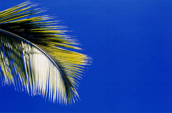 Art Print featuring the photograph Green Palms Blue Sky by Lyle Crump