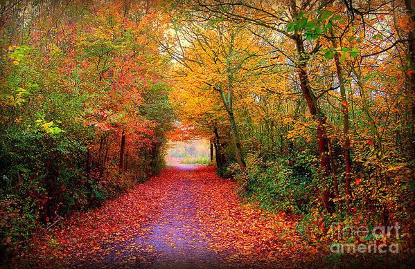 Autumn Art Print featuring the photograph Hope by Jacky Gerritsen