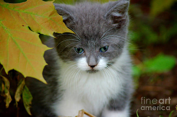Kitten Art Print featuring the photograph I See You by Elizabeth Stone