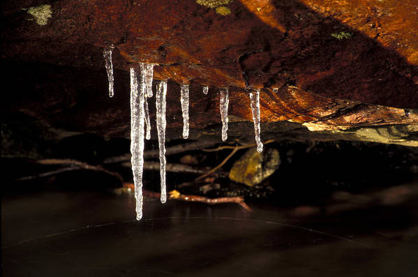 Ice Art Print featuring the photograph Icicles by Richard Steinberger