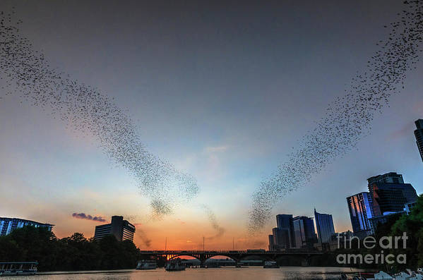 Austin Bats Cityscape Art Print featuring the photograph In Austin Streams Of Mexican Freetailed Bats The Worlds Largest Urban Bat Colony Take To The Skies During Sunset by Austin Bat Tours