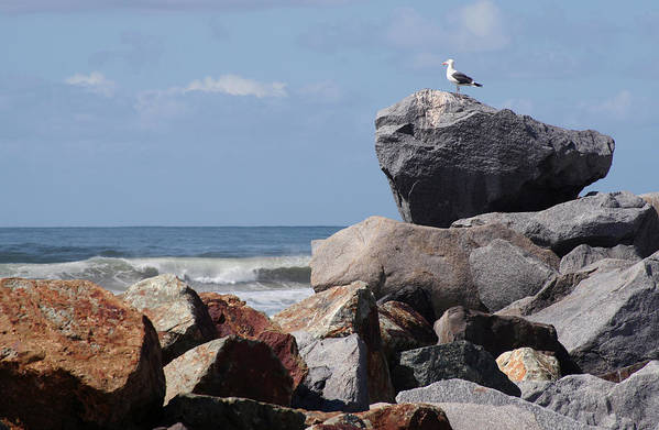 Beach Art Print featuring the photograph King Of The Rocks by Margie Wildblood