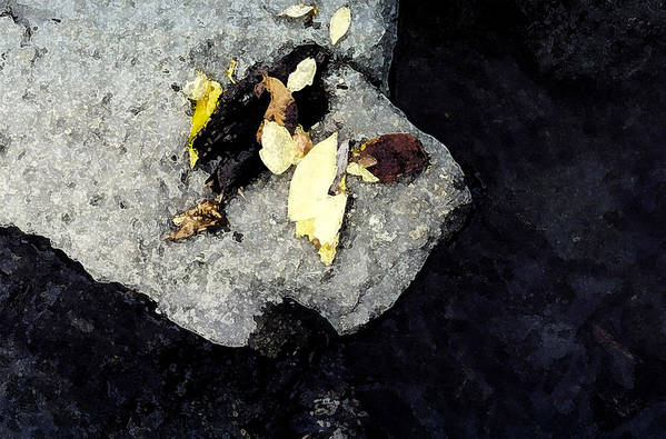 Rock Art Print featuring the photograph Leaves On The Rocks by Lyle Crump