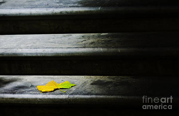 Maple Leaf Art Print featuring the photograph Maple Leaf On Step by Avalon Fine Art Photography