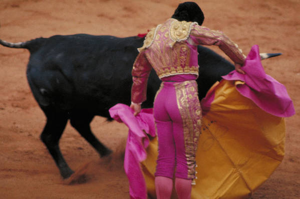 Fight Art Print featuring the photograph Matador And Bull by Carl Purcell