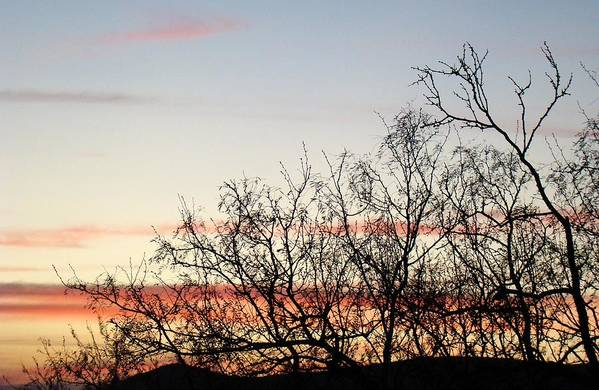 Landscape Art Print featuring the photograph Mesquite Sunset Three by Ana Villaronga