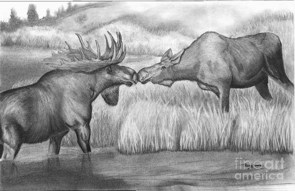 Wildlife Art Print featuring the drawing Moose Looking For Love by Russ Smith