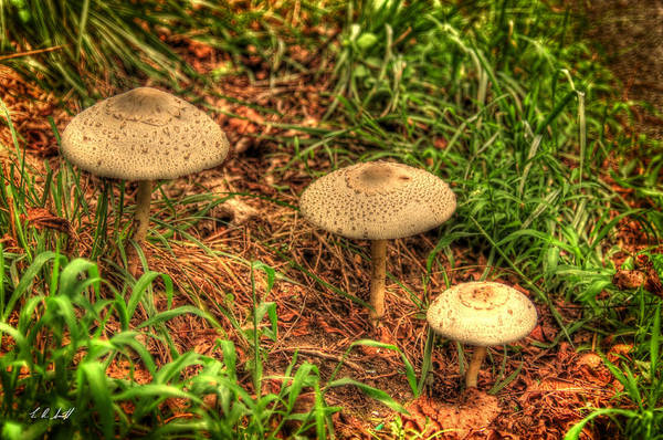 Hdr Art Print featuring the photograph Mushroom Family by E R Smith