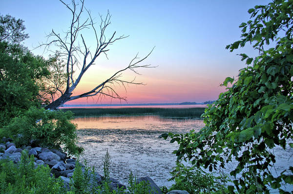 Tree Art Print featuring the photograph Pastel Clear Lake 3 by Bonfire Photography