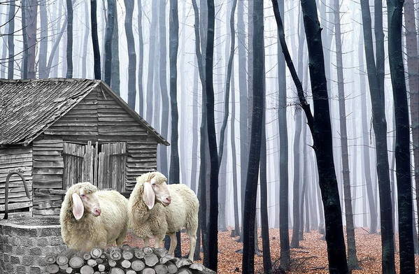 Sheep Art Print featuring the photograph Peacefully by Manfred Lutzius