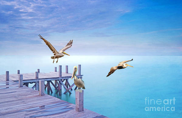 Brown Pelicans Art Print featuring the photograph Pelican Party by Laura D Young
