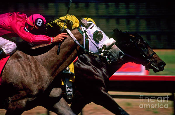 Horse Art Print featuring the photograph Photo Finish by Kathy McClure