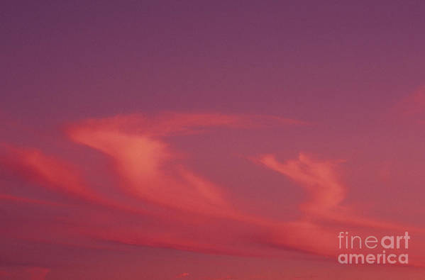 Afternoon Art Print featuring the photograph Pink Swirling Clouds by Carl Shaneff - Printscapes