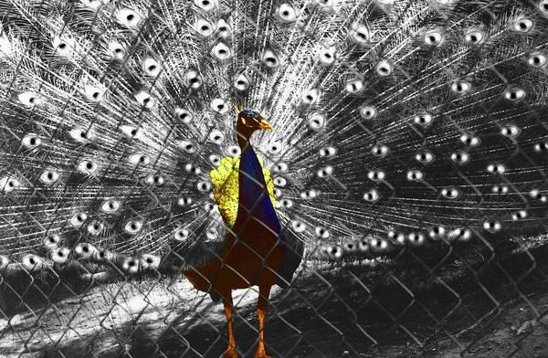 Al Bourassa Art Print featuring the photograph Proud As A Peacock by Al Bourassa
