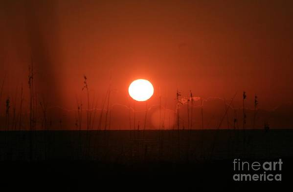 Sunset Art Print featuring the photograph Red Sunset And Grasses by Nadine Rippelmeyer