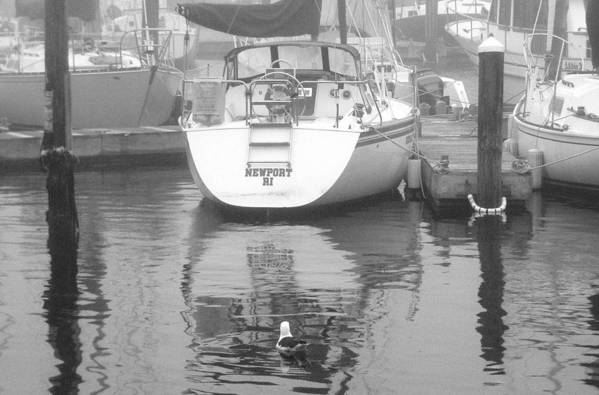 Gull Art Print featuring the photograph Reflecting On Newport by Jim Greer