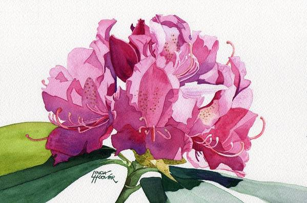 Rhododendron Art Print featuring the painting Rhododendron by Linda Hoover
