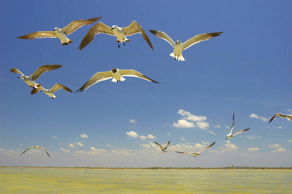 Seagull Art Print featuring the photograph Seagulls by Elisa Locci