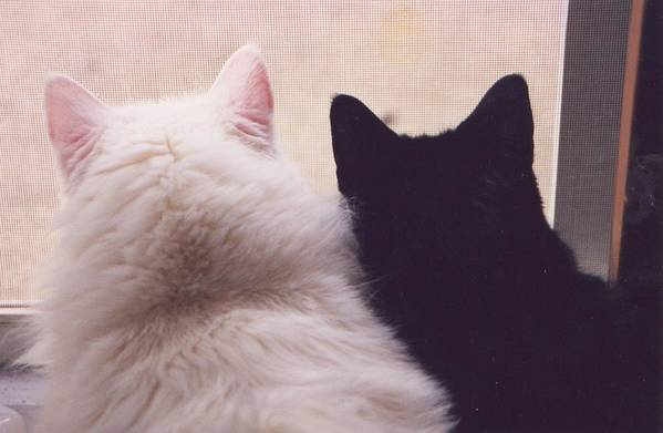 Cats Art Print featuring the photograph Sharing The View by Stephanie Golden